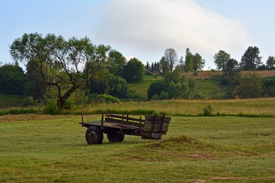 Natural, Farm, Landscape, Countryside, Field, Green