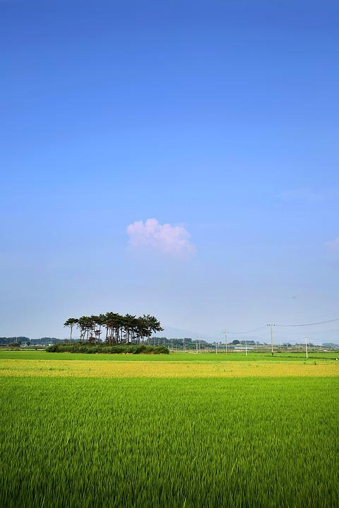 Rice Paddies, Ch, Rural, Landscape, Field, Nature, S
