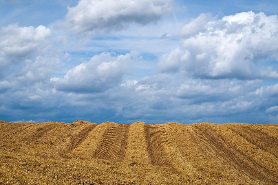 Landscape, Field, Summer, Fields, Nature, Agriculture