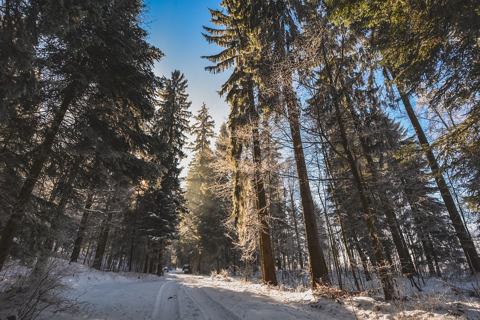Forest, Snow, Path, Trees, Fir, Winter, Cold, Landscape