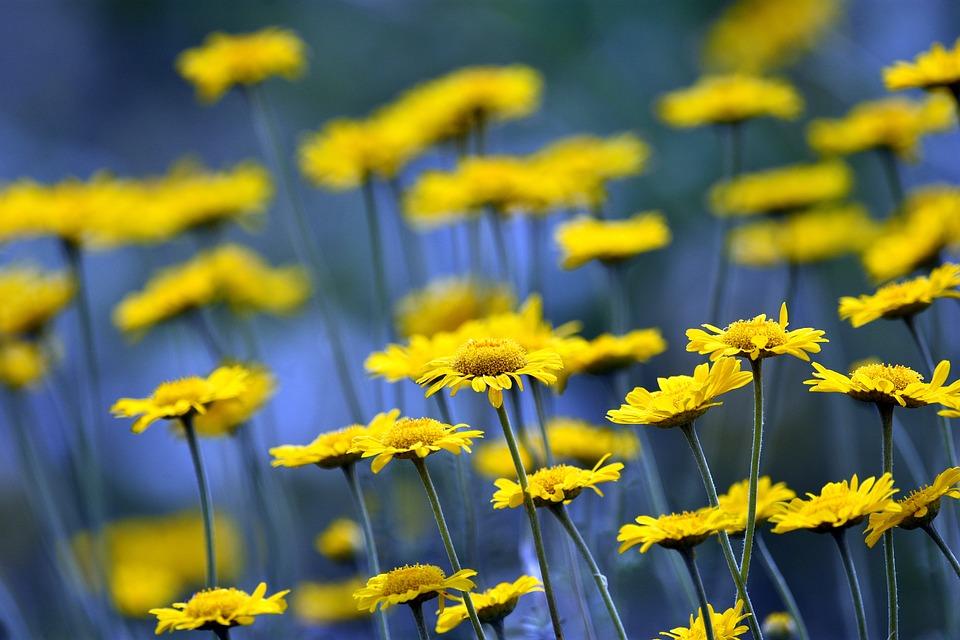 Flowers, Flower, Meadow, Summer, Landscape, Spring
