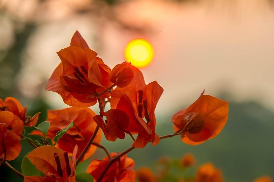 Sunset, Flowers, Nature, Summer, Landscape, Sky