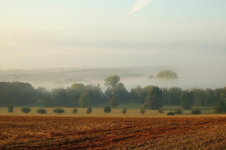 Landscape, Fog, Nature, Mood, Trees, Atmosphere, Autumn