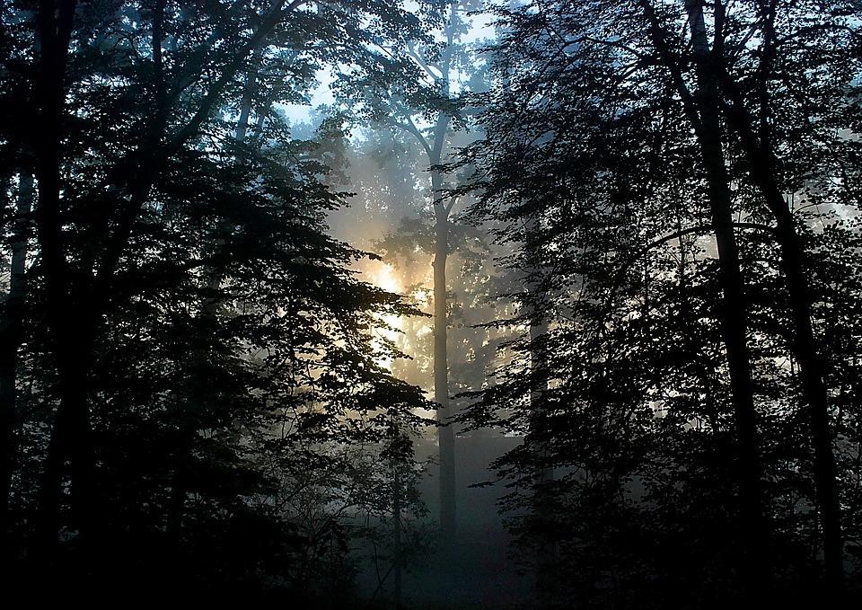 Forest, East, The Sun, Fog, Sunrise, Nature, Landscape