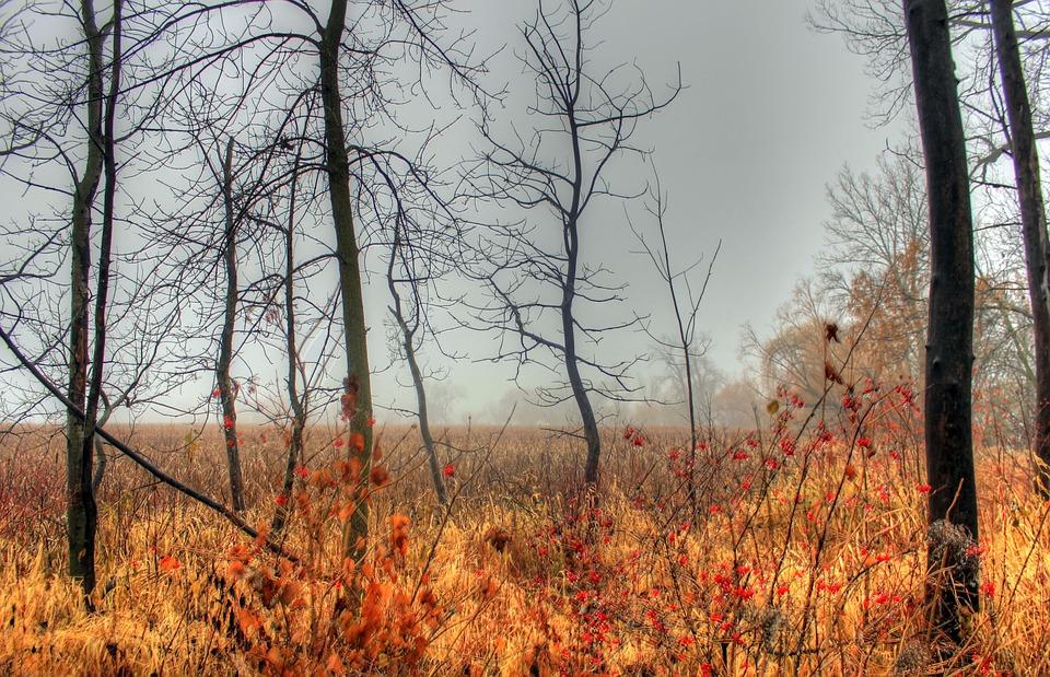 Mist, Fog, Marsh, Nature, Grass, Trees, Landscape