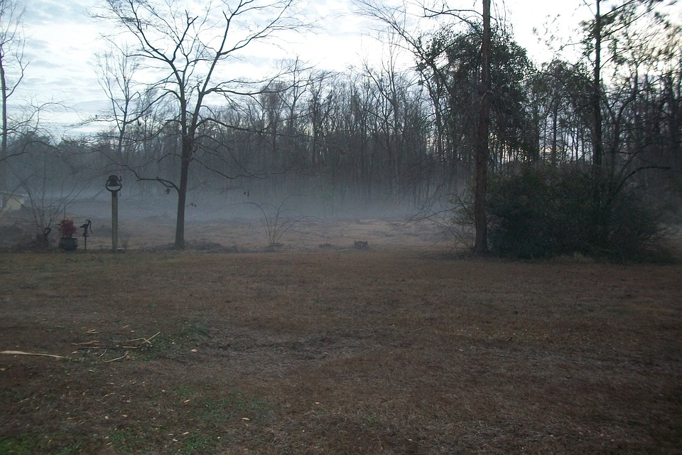 Foggy Morning, Fog, Foggy, Landscape, Mist, Morning