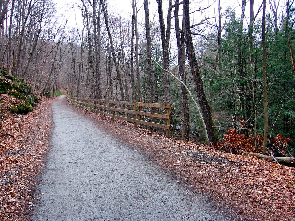 Connecticut, Landscape, Forest, Trees, Road, Trail