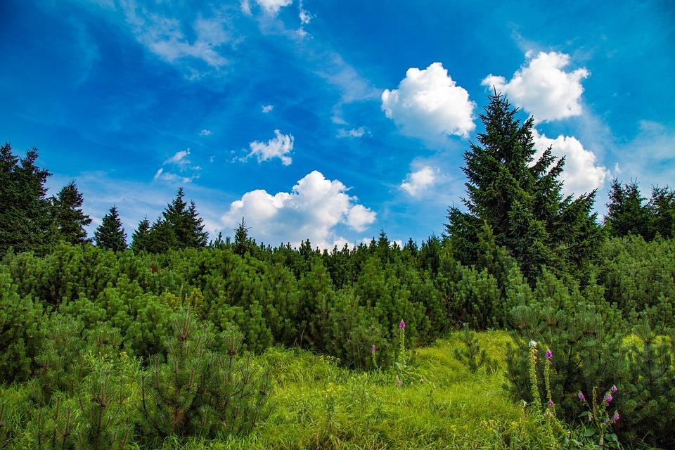Forest, Figure, Landscape