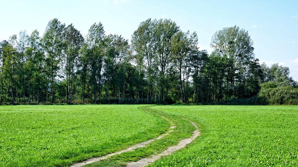 Away, Lane, Forest, Landscape, Nature, Landscape Way