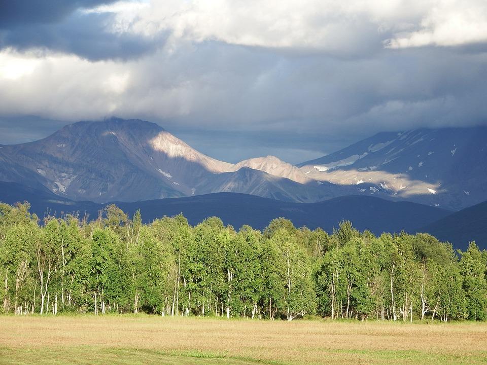 Mountains, Forest, Field, Nature, Summer, Landscape
