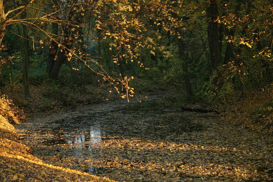 Lake, Leaves, Autumn, Nature, Landscape, Trees, Forest