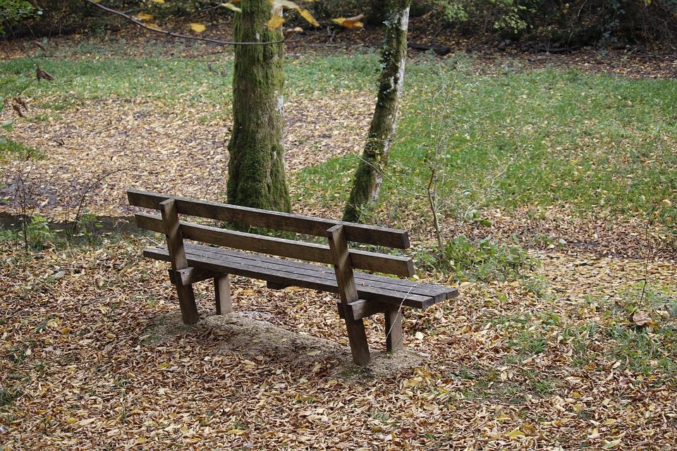 Nature, Bench, Forest, Leaves, Autumn, Landscape