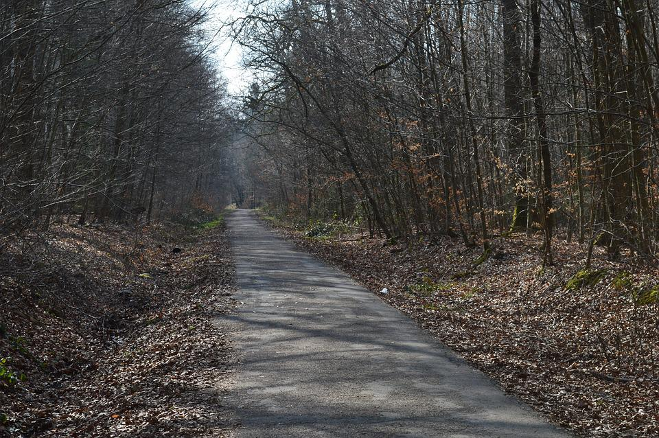 Forest Path, Landscape, Forest Trail, Trees, Forest