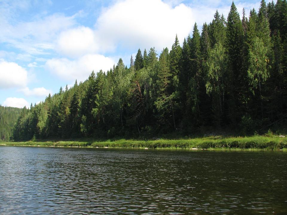 River, Forest, Summer, Alloy, Landscape, Nature, Trees