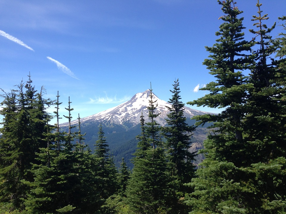 Forest, Trees, Peak, Snow, Landscape, Mountain, Summer