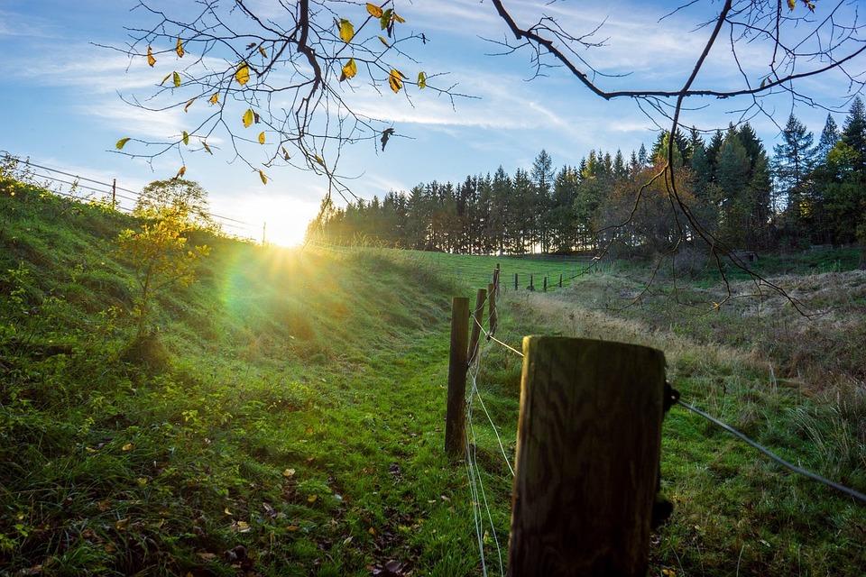 Autumn, Sun, Fence, Forest, Field, Landscape, Nature