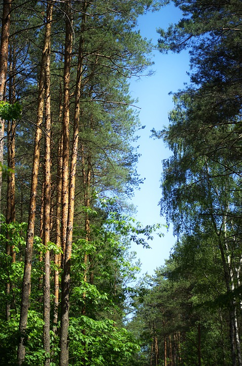 Trees, Top, Forest, Nature, Green, Leaves, Landscape