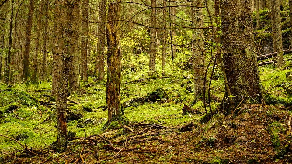 Transylvania, Forest, Woods, Nature, Trees, Landscape