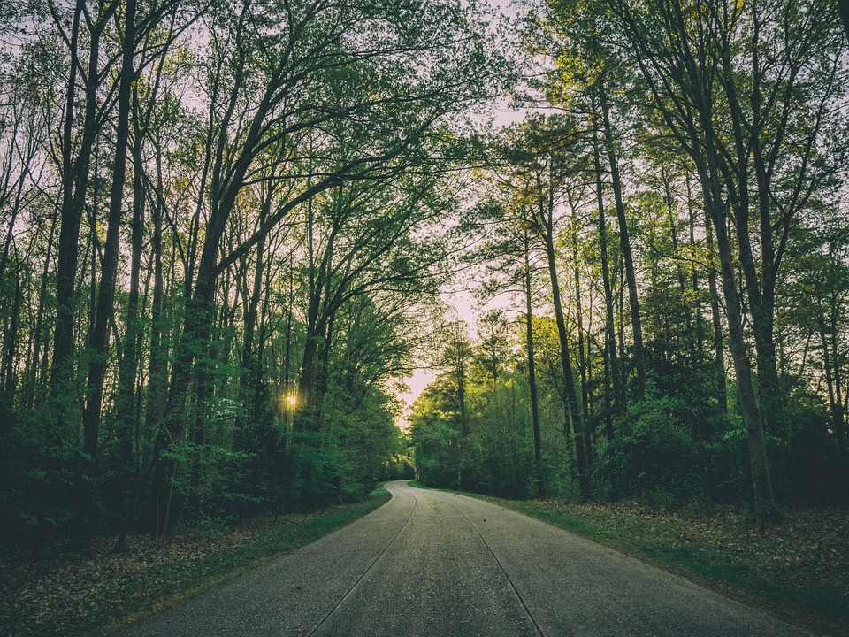 Asphalt, Branches, Forest, Grass, Landscape, Road