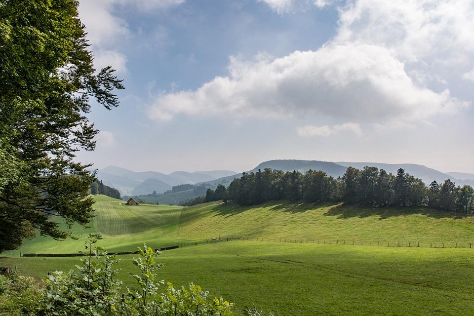 Nature, Landscape, Panorama, Tree, Grass, Hill, Summer