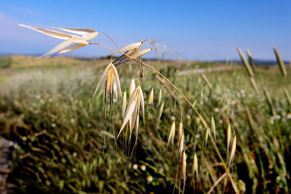Nature, Field, Grass, Sky, Landscape, Schönwetter