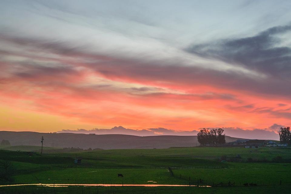 Nature, Landscape, Prairie, Grasslands, Grass, Trees