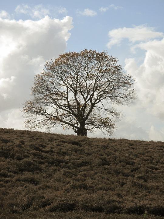 Heide, Tree, Nature, Landscape, Netherlands, Air