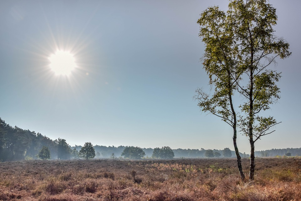 Landscape, Tree, Autumn Sun, Heide