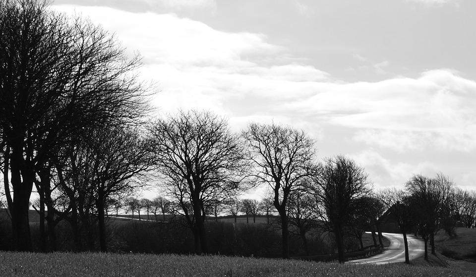 Trees, Winter, Road, Landscape, Hindsholm, Fyn, Denmark