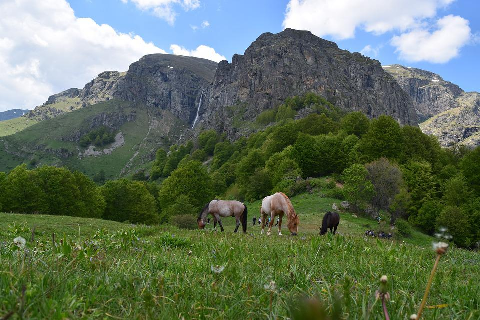 Horses, Mountain, Landscape