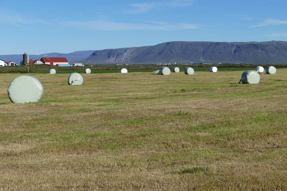 Iceland, Landscape, Nature, Mountains, Agriculture