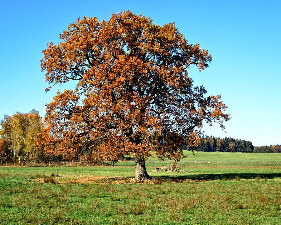 Tree, Individually, Autumn, Leaves, Sky, Landscape