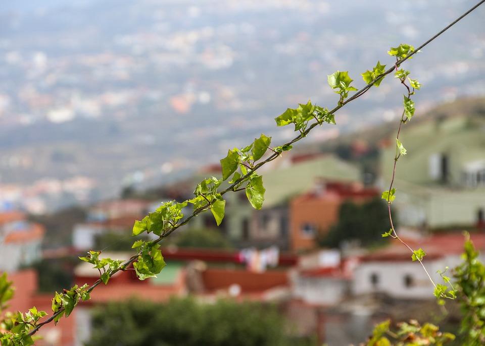 Ivy, Entwine, Plant, Landscape, Climber Plant, Nature