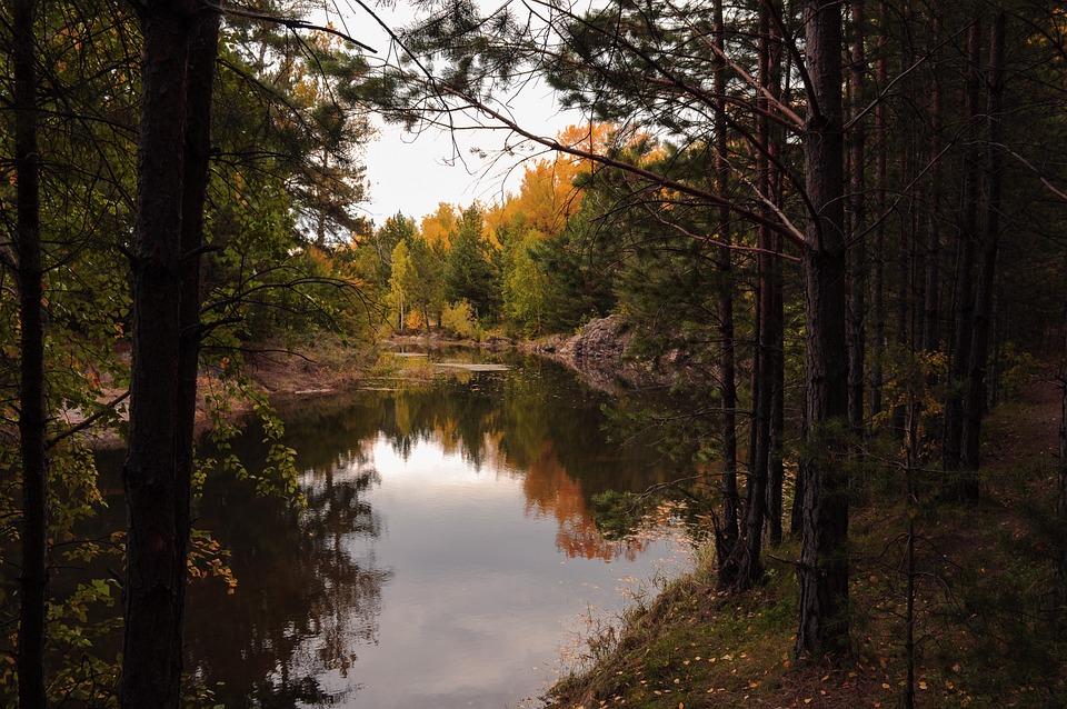 Autumn, Landscape, Forest, Nature, Creek, Lake, Water