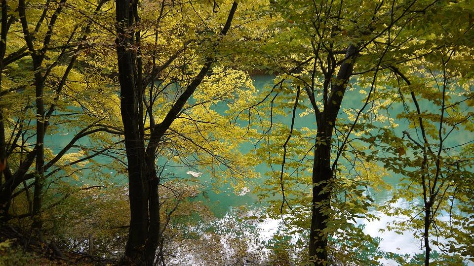 Green, Lake, Nature, Landscape, Trees, National Park