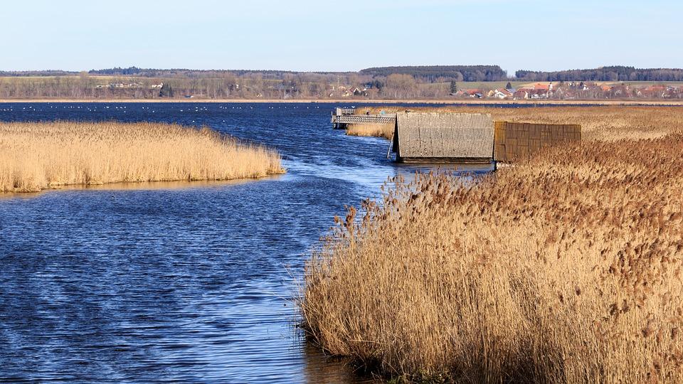 Spring Lake, Nature Conservation, Landscape, Lake, Reed