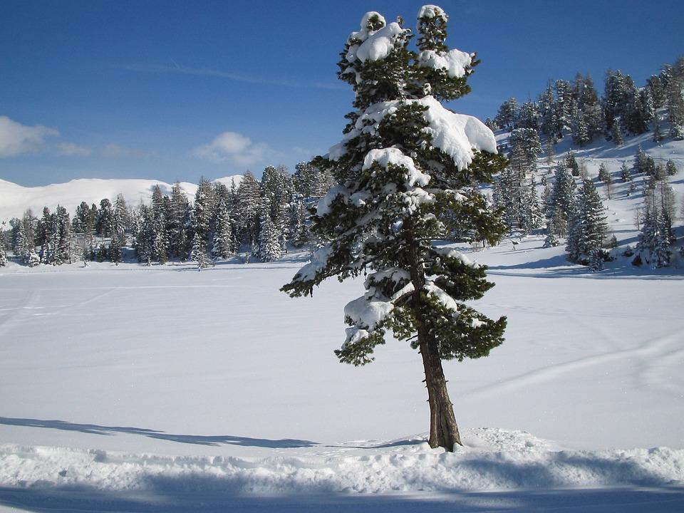 Snow, Lake, Winter, Landscape, Ice, Frozen, Tree