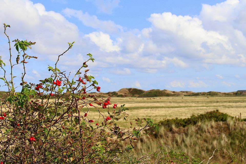 Langeoog, Landscape, Sky, Nature, Coast, North Sea