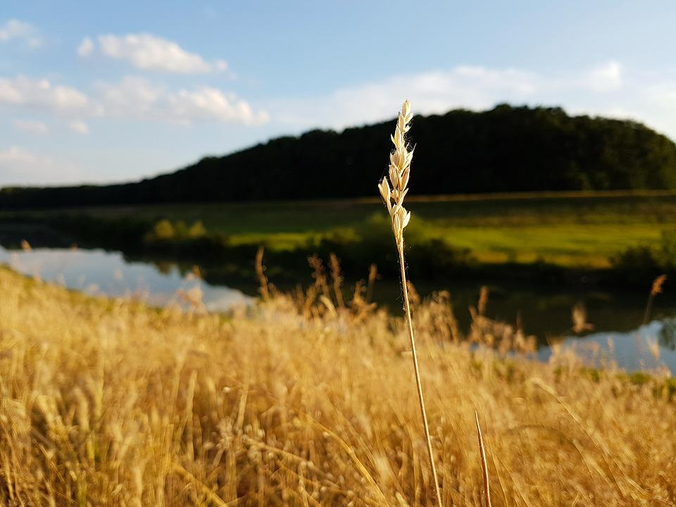 Landscape, Nature, Field, Lawn, Outdoors, River, Water