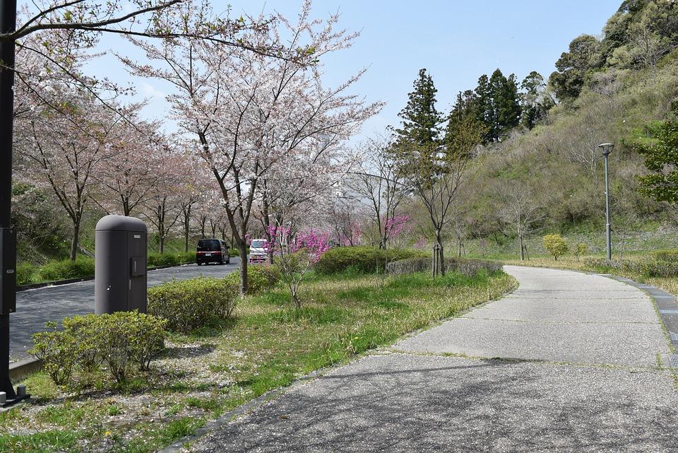 Tree, Nature, Road, Lawn, Landscape, Station