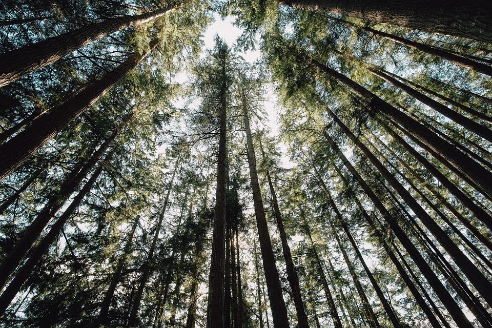 Wood, Tree, Nature, Leaf, Branch, Landscape, Outdoors