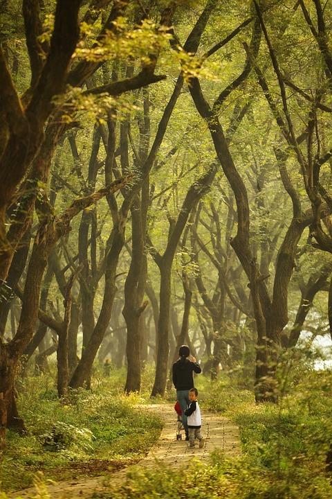 Forest, Tree, Telephoto, Landscape, Natural, Leaf