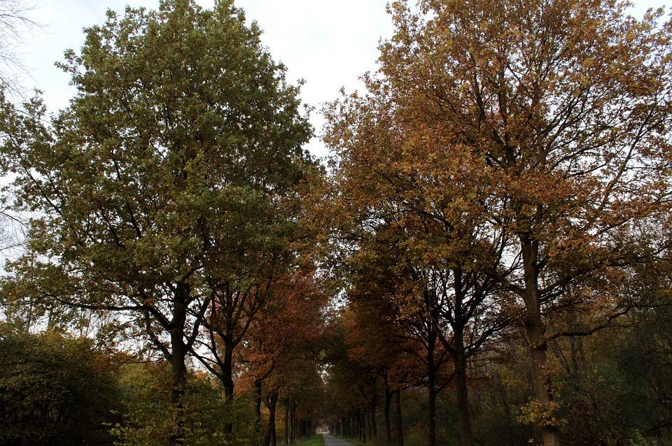 Radical Garage Sale, Forest, Leaves, Landscape, Autumn