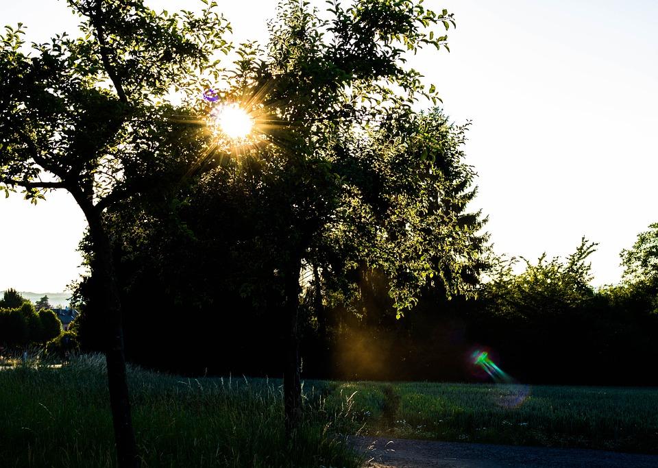 Sun, Nature, Landscape, Tree, Light, Romance