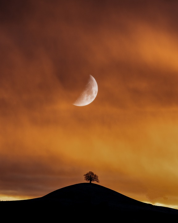 Moon, Lonely, Tree, Landscape, Sky, Mood, Loneliness
