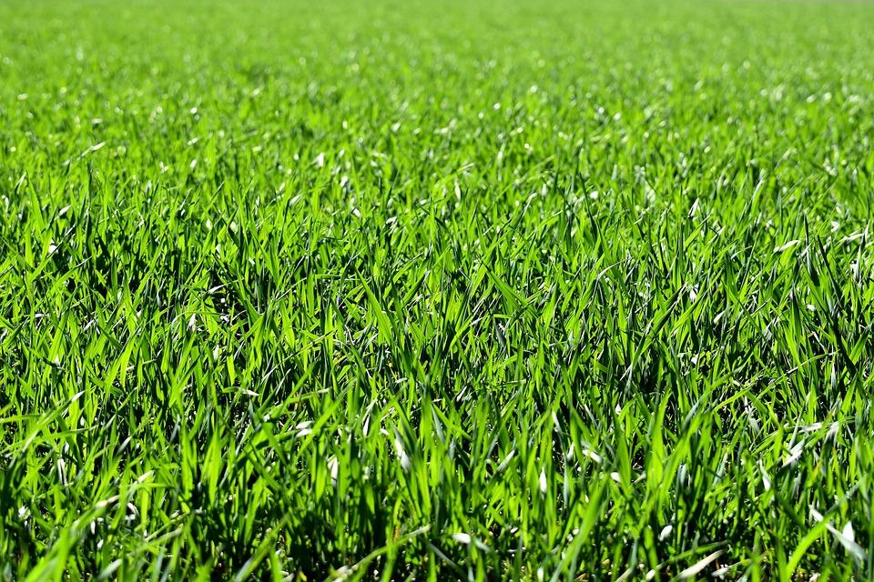 Meadow, Field, Green, Nature, Grass, Landscape, Rush