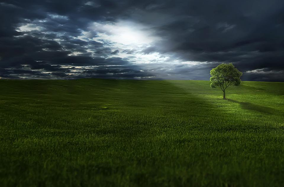 Tree, Meadow, Clouds, Grass, Landscape, Outdoors