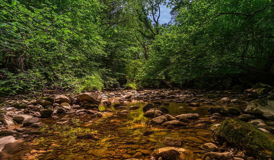 Nature, Forest, Landscape, Green, Idyll, Mirroring