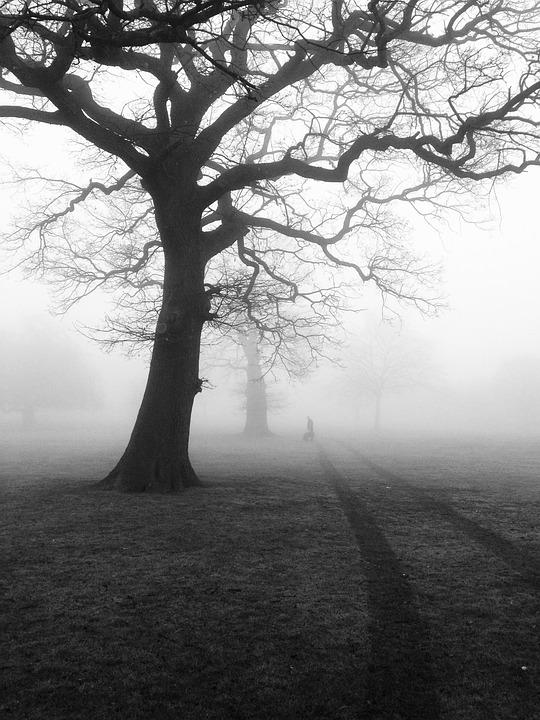Trees, Mist, Fog, Eerie, Nature, Landscape, Forest