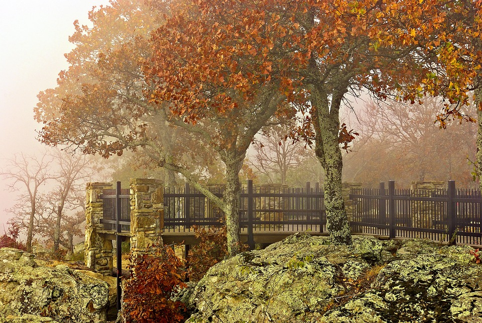 Autumn Petit Jean Fog, Fog, Mist, Nature, Landscape